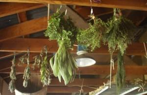 Hanging_Herbs